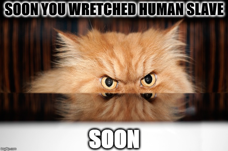 SOON YOU WRETCHED HUMAN SLAVE SOON | image tagged in soon | made w/ Imgflip meme maker