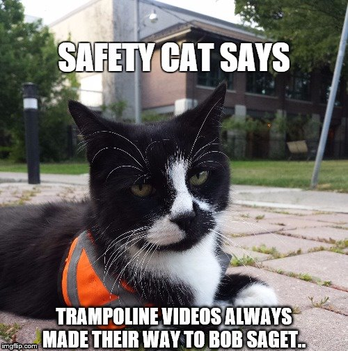 Tosh.. Am I a joke to you? |  TRAMPOLINE VIDEOS ALWAYS MADE THEIR WAY TO BOB SAGET.. | image tagged in dogs an cats,catsale | made w/ Imgflip meme maker