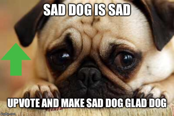 Sad Dog | SAD DOG IS SAD UPVOTE AND MAKE SAD DOG GLAD DOG | image tagged in sad dog | made w/ Imgflip meme maker