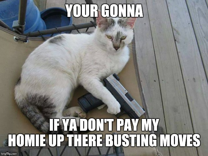 CAT NIP OR DEATH | YOUR GONNA IF YA DON'T PAY MY HOMIE UP THERE BUSTING MOVES | image tagged in cat nip or death | made w/ Imgflip meme maker