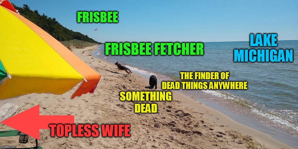 FRISBEE SOMETHING DEAD FRISBEE FETCHER THE FINDER OF DEAD THINGS ANYWHERE LAKE MICHIGAN TOPLESS WIFE | made w/ Imgflip meme maker