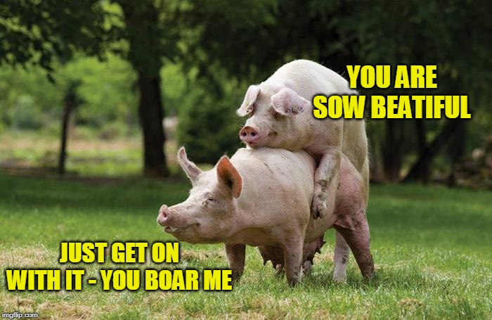 He's B-oink-ing her | YOU ARE SOW BEATIFUL JUST GET ON WITH IT - YOU BOAR ME | image tagged in memes,pigs,sex | made w/ Imgflip meme maker