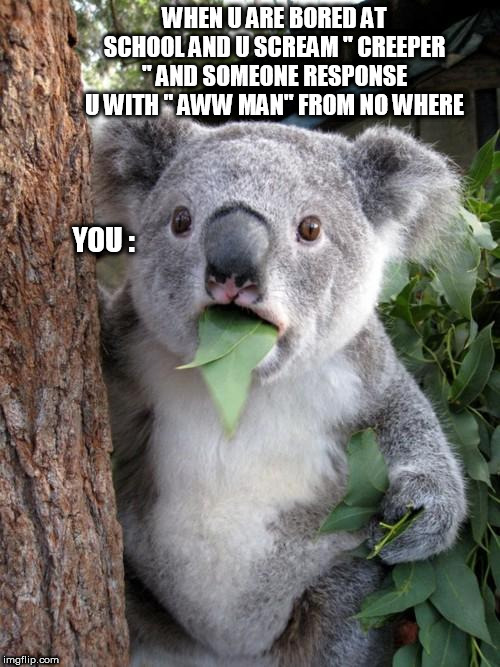 "Surprised Koala Meme | WHEN U ARE BORED AT SCHOOL AND U SCREAM "" CREEPER "" AND SOMEONE RESPONSE U WITH "" AWW MAN"" FROM NO WHERE YOU : 