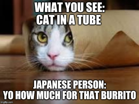 Cat in tube | WHAT YOU SEE: CAT IN A TUBE JAPANESE PERSON: YO HOW MUCH FOR THAT BURRITO | image tagged in cat in tube | made w/ Imgflip meme maker