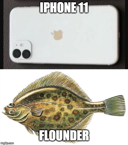 iPhone 11 looks like a flounder | IPHONE 11 FLOUNDER | image tagged in iphone 11,iphone,flounder,apple | made w/ Imgflip meme maker