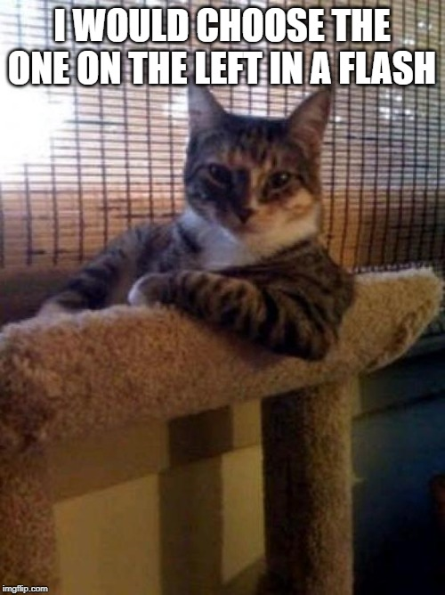 The Most Interesting Cat In The World Meme | I WOULD CHOOSE THE ONE ON THE LEFT IN A FLASH | image tagged in memes,the most interesting cat in the world | made w/ Imgflip meme maker