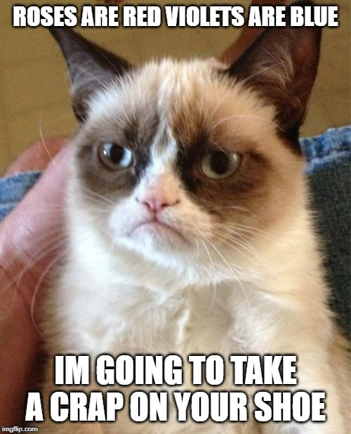 Grumpy Cat | ROSES ARE RED VIOLETS ARE BLUE IM GOING TO TAKE A CRAP ON YOUR SHOE | image tagged in memes,grumpy cat | made w/ Imgflip meme maker