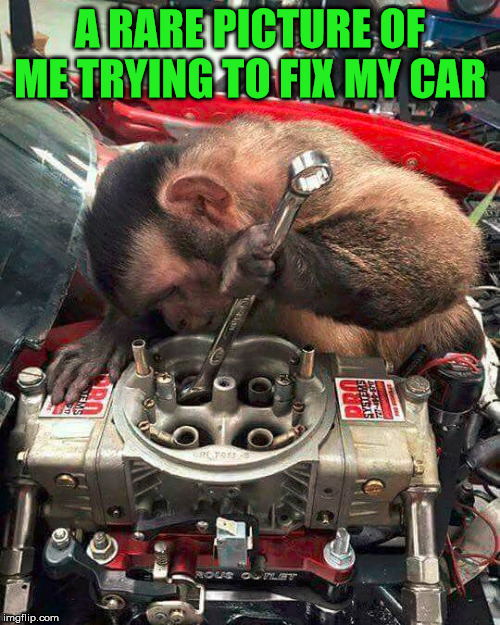 Working on my car |  A RARE PICTURE OF ME TRYING TO FIX MY CAR | image tagged in cars,hardworking guy,monkey | made w/ Imgflip meme maker