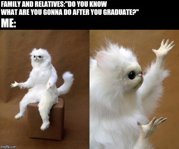 "Persian Cat Room Guardian | FAMILY AND RELATIVES:""DO YOU KNOW WHAT ARE YOU GONNA DO AFTER YOU GRADUATE?"" ME: 