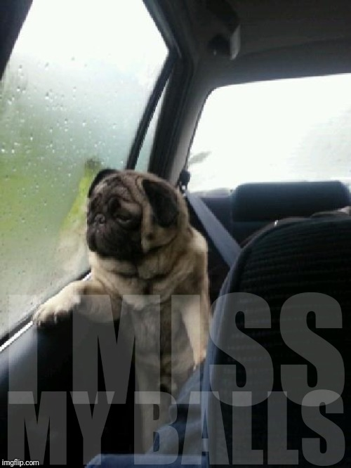 Introspective Pug |  I MISS; MY BALLS | image tagged in introspective pug | made w/ Imgflip meme maker