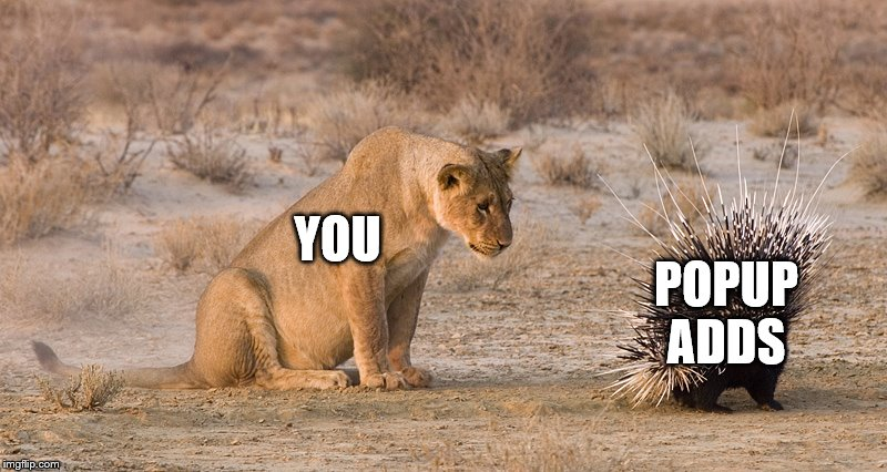 Careful, Touching It Might Make More | YOU POPUP ADDS | image tagged in lion and porcupine | made w/ Imgflip meme maker