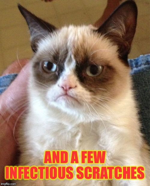 Grumpy Cat Meme | AND A FEW INFECTIOUS SCRATCHES | image tagged in memes,grumpy cat | made w/ Imgflip meme maker
