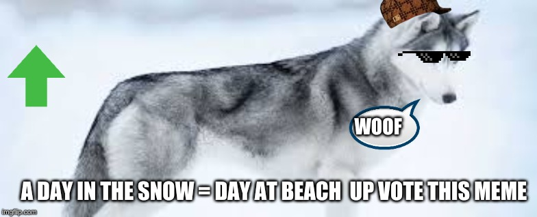 husky hangs out | WOOF A DAY IN THE SNOW = DAY AT BEACH  UP VOTE THIS MEME | image tagged in dog | made w/ Imgflip meme maker