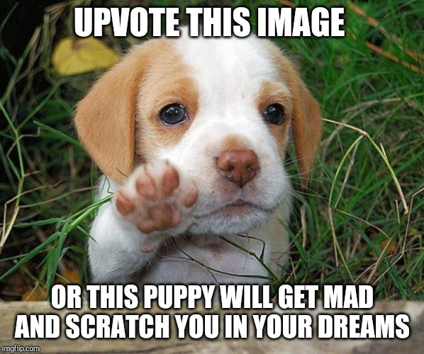 dog puppy bye | UPVOTE THIS IMAGE OR THIS PUPPY WILL GET MAD AND SCRATCH YOU IN YOUR DREAMS | image tagged in dog puppy bye | made w/ Imgflip meme maker
