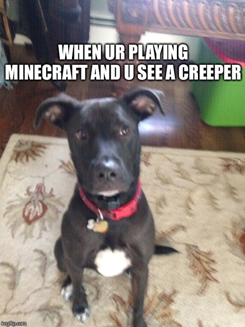 WHEN UR PLAYING MINECRAFT AND U SEE A CREEPER | image tagged in minecraft,puppy | made w/ Imgflip meme maker