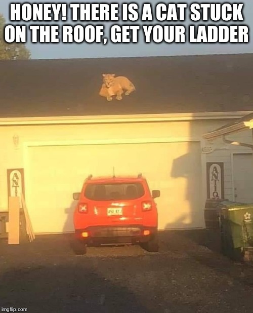 You know it would happen | HONEY! THERE IS A CAT STUCK ON THE ROOF, GET YOUR LADDER | image tagged in cat on a hot not tin roof,get your ladder,here kitty kitty,what did they feed that cat,my roof my rules | made w/ Imgflip meme maker