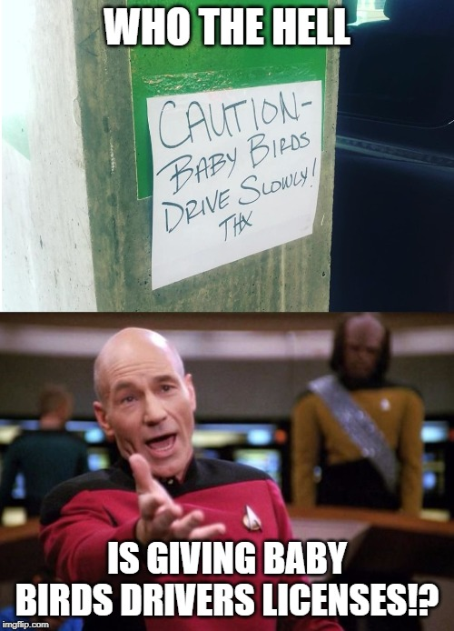 Baby Birds Drive Slowly |  WHO THE HELL; IS GIVING BABY BIRDS DRIVERS LICENSES!? | image tagged in baby bird picard,star trek,captain picard facepalm,picard wtf,star wars | made w/ Imgflip meme maker