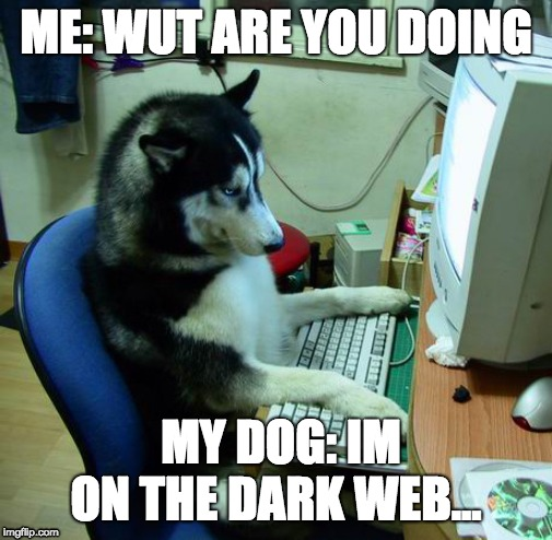 I Have No Idea What I Am Doing Meme | ME: WUT ARE YOU DOING MY DOG: IM ON THE DARK WEB... | image tagged in memes,i have no idea what i am doing | made w/ Imgflip meme maker