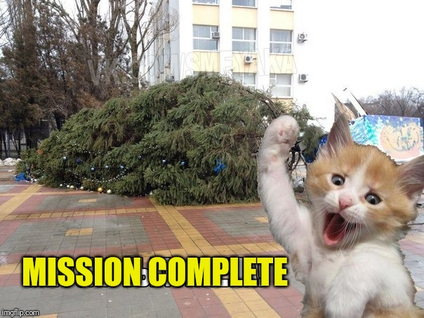 Cat wtf mission completed! | MISSION COMPLETE | image tagged in funny,cats,wtf,challenge accepted,tree,happy new year | made w/ Imgflip meme maker
