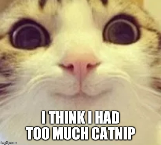 Image Tagged In Funny Cat Memes Cats Funny Cats Smiling Cat Imgflip