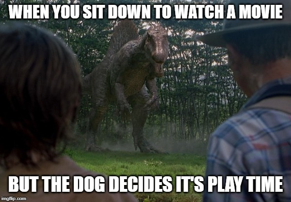 WHEN YOU SIT DOWN TO WATCH A MOVIE BUT THE DOG DECIDES IT'S PLAY TIME | image tagged in jurassic,park,dinosaur,dog,play | made w/ Imgflip meme maker