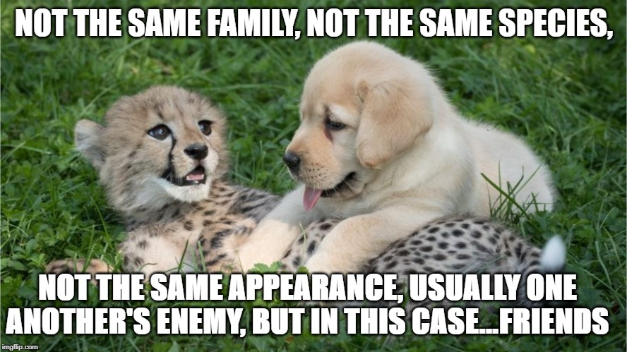 NOT THE SAME FAMILY, NOT THE SAME SPECIES, NOT THE SAME APPEARANCE, USUALLY ONE ANOTHER'S ENEMY, BUT IN THIS CASE...FRIENDS | image tagged in animals | made w/ Imgflip meme maker