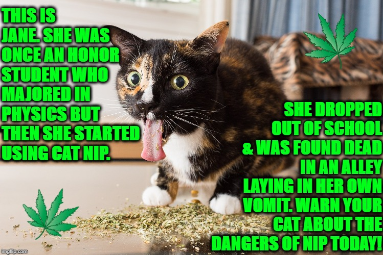 THIS IS JANE. SHE WAS ONCE AN HONOR STUDENT WHO MAJORED IN PHYSICS BUT THEN SHE STARTED USING CAT NIP. SHE DROPPED OUT OF SCHOOL & WAS FOUND | image tagged in drug addict | made w/ Imgflip meme maker