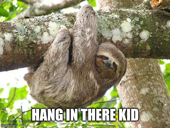 Hang in theree | HANG IN THERE KID | image tagged in hang in theree | made w/ Imgflip meme maker