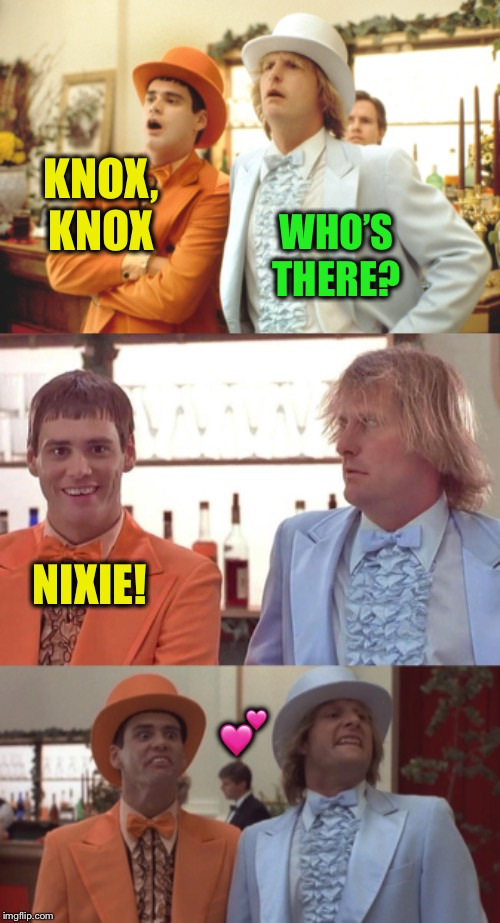 Sending a smile :-) |  KNOX, KNOX; WHO'S THERE? NIXIE! 💕 | image tagged in memes,dumb and dumber,nixieknox | made w/ Imgflip meme maker