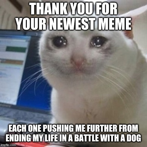 Crying cat | THANK YOU FOR YOUR NEWEST MEME EACH ONE PUSHING ME FURTHER FROM ENDING MY LIFE IN A BATTLE WITH A DOG | image tagged in crying cat | made w/ Imgflip meme maker