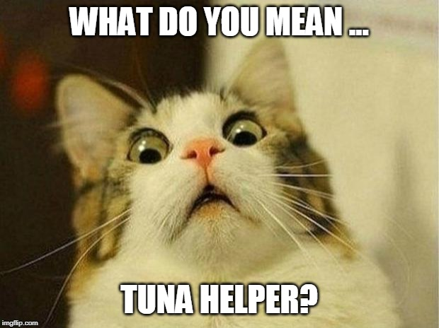 What do you mean... Tuna Helper? | WHAT DO YOU MEAN ... TUNA HELPER? | image tagged in memes,scared cat,funny memes,tuna,kitten | made w/ Imgflip meme maker