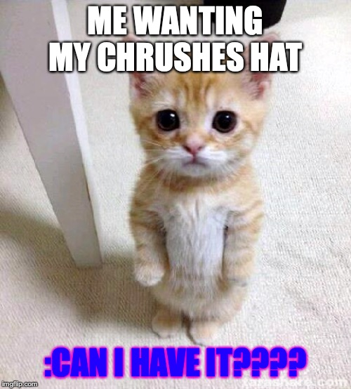 Cute Cat | ME WANTING MY CHRUSHES HAT :CAN I HAVE IT???? | image tagged in memes,cute cat | made w/ Imgflip meme maker