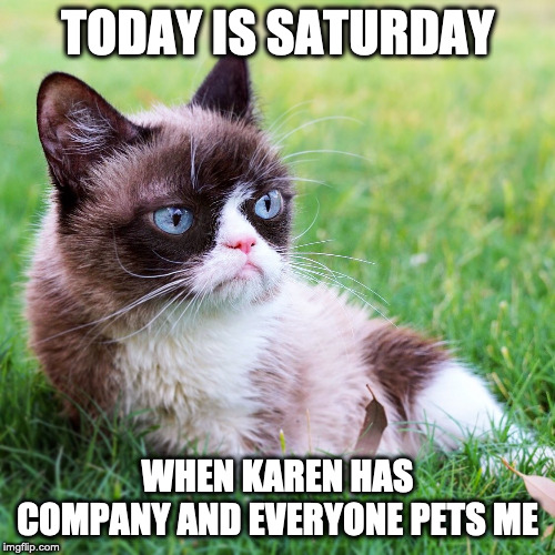 Saturday Grumpy Cat |  TODAY IS SATURDAY; WHEN KAREN HAS COMPANY AND EVERYONE PETS ME | image tagged in grumpy cat not amused,saturday,funny memes,karen | made w/ Imgflip meme maker