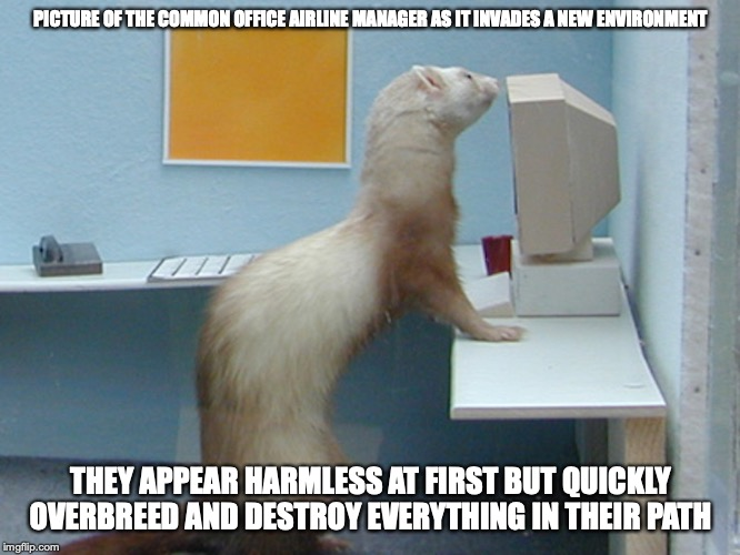 Weasel | PICTURE OF THE COMMON OFFICE AIRLINE MANAGER AS IT INVADES A NEW ENVIRONMENT THEY APPEAR HARMLESS AT FIRST BUT QUICKLY OVERBREED AND DESTROY | image tagged in manager,memes,airlines | made w/ Imgflip meme maker