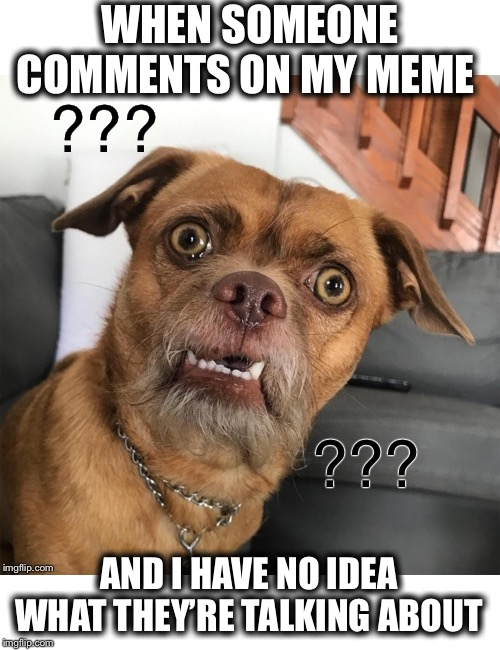 Anyone else? Asking for a friend | WHEN SOMEONE COMMENTS ON MY MEME AND I HAVE NO IDEA WHAT THEY'RE TALKING ABOUT | image tagged in confused,huh,no clue,say again,could you restate that,are you high | made w/ Imgflip meme maker