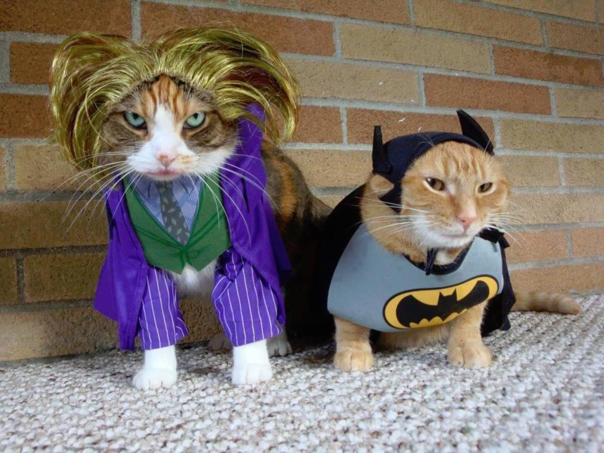 Прикольные костюмы для котов гифки, день