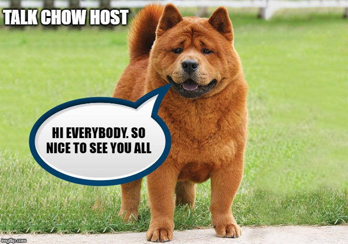 Talk Show Host | TALK CHOW HOST HI EVERYBODY. SO NICE TO SEE YOU ALL | image tagged in chow,talk,funny memes,dog | made w/ Imgflip meme maker