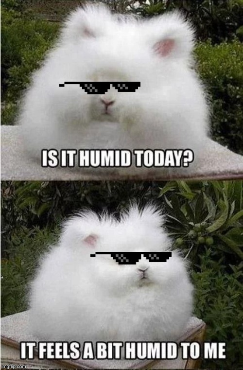 image tagged in bunny,weather,humid,fluffy | made w/ Imgflip meme maker