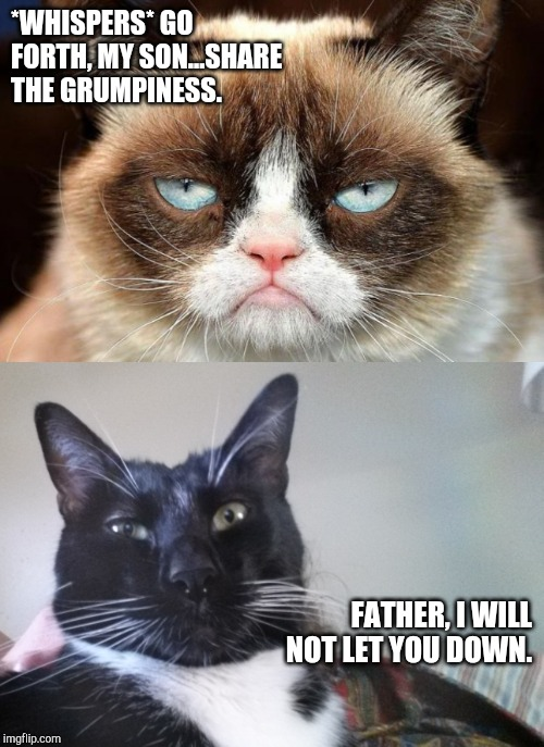 *WHISPERS* GO FORTH, MY SON...SHARE THE GRUMPINESS. FATHER, I WILL NOT LET YOU DOWN. | image tagged in memes,grumpy cat not amused | made w/ Imgflip meme maker