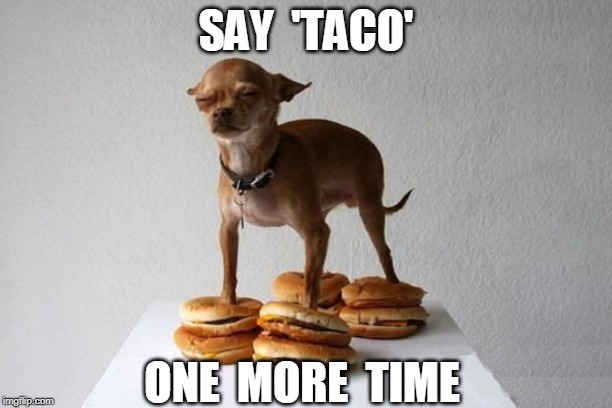 NO TACO |  SAY  'TACO'; ONE  MORE  TIME | image tagged in taco bell,cheeseburger,doge | made w/ Imgflip meme maker
