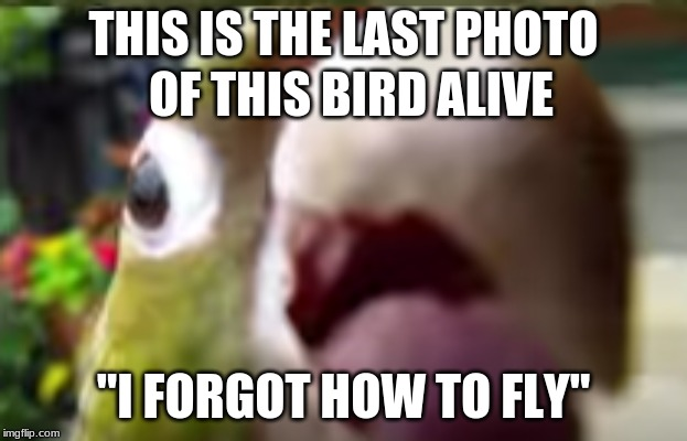 "THIS IS THE LAST PHOTO ""I FORGOT HOW TO FLY"" OF THIS BIRD ALIVE 