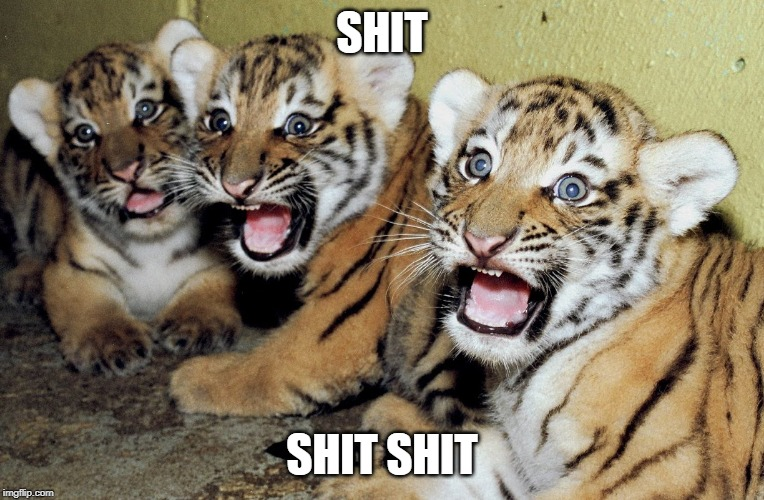 SCARED TIGER CUBS | SHIT SHIT SHIT | image tagged in scared tiger cubs | made w/ Imgflip meme maker