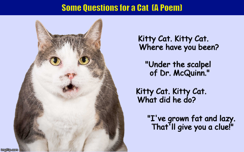 Some Questions for a Cat (A Poem) | image tagged in cat,kitty cat,neutered,castration,funny,memes | made w/ Imgflip meme maker