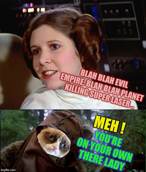 BLAH BLAH EVIL EMPIRE. BLAH BLAH PLANET KILLING SUPER LASER .. MEH ! YOU'RE ON YOUR OWN THERE LADY | image tagged in princess leia too easy,grumpy ewok tilted head | made w/ Imgflip meme maker