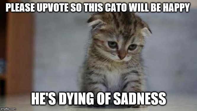 Sad kitten | PLEASE UPVOTE SO THIS CATO WILL BE HAPPY HE'S DYING OF SADNESS | image tagged in sad kitten | made w/ Imgflip meme maker