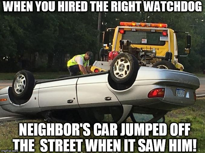 WHEN YOU HIRED THE RIGHT WATCHDOG NEIGHBOR'S CAR JUMPED OFF THE  STREET WHEN IT SAW HIM! | made w/ Imgflip meme maker
