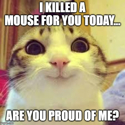 potatos and catshi crazy | I KILLED A MOUSE FOR YOU TODAY... ARE YOU PROUD OF ME? | image tagged in potatos and catshi crazy | made w/ Imgflip meme maker