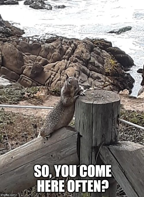 SO, YOU COME HERE OFTEN? | image tagged in funny,squirrel,pickup line | made w/ Imgflip meme maker