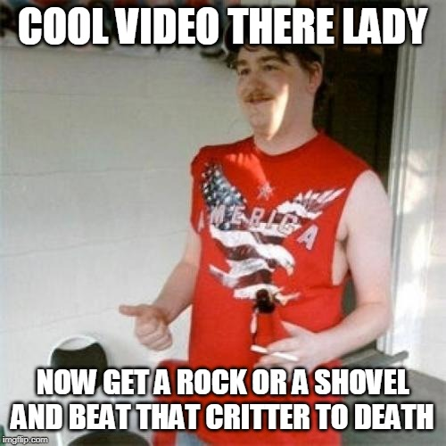 Redneck Randal Meme | COOL VIDEO THERE LADY NOW GET A ROCK OR A SHOVEL AND BEAT THAT CRITTER TO DEATH | image tagged in memes,redneck randal | made w/ Imgflip meme maker