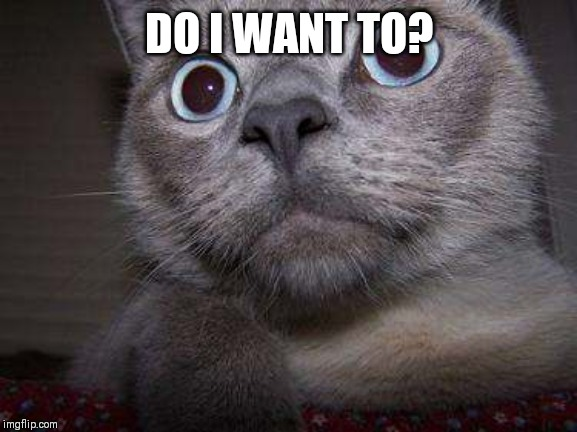 Freaky eye cat | DO I WANT TO? | image tagged in freaky eye cat | made w/ Imgflip meme maker